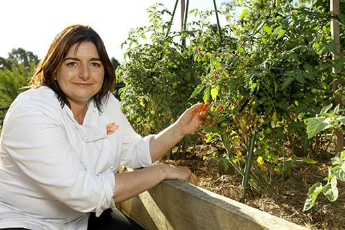Jaci from Jacican cooking school picks fresh tomatoes in her kitchen garden, Mirboo Nortg, Gippsland