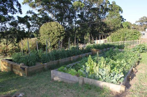 Jacican Cooking School's kitchen garden, Mirboo North Gippsland